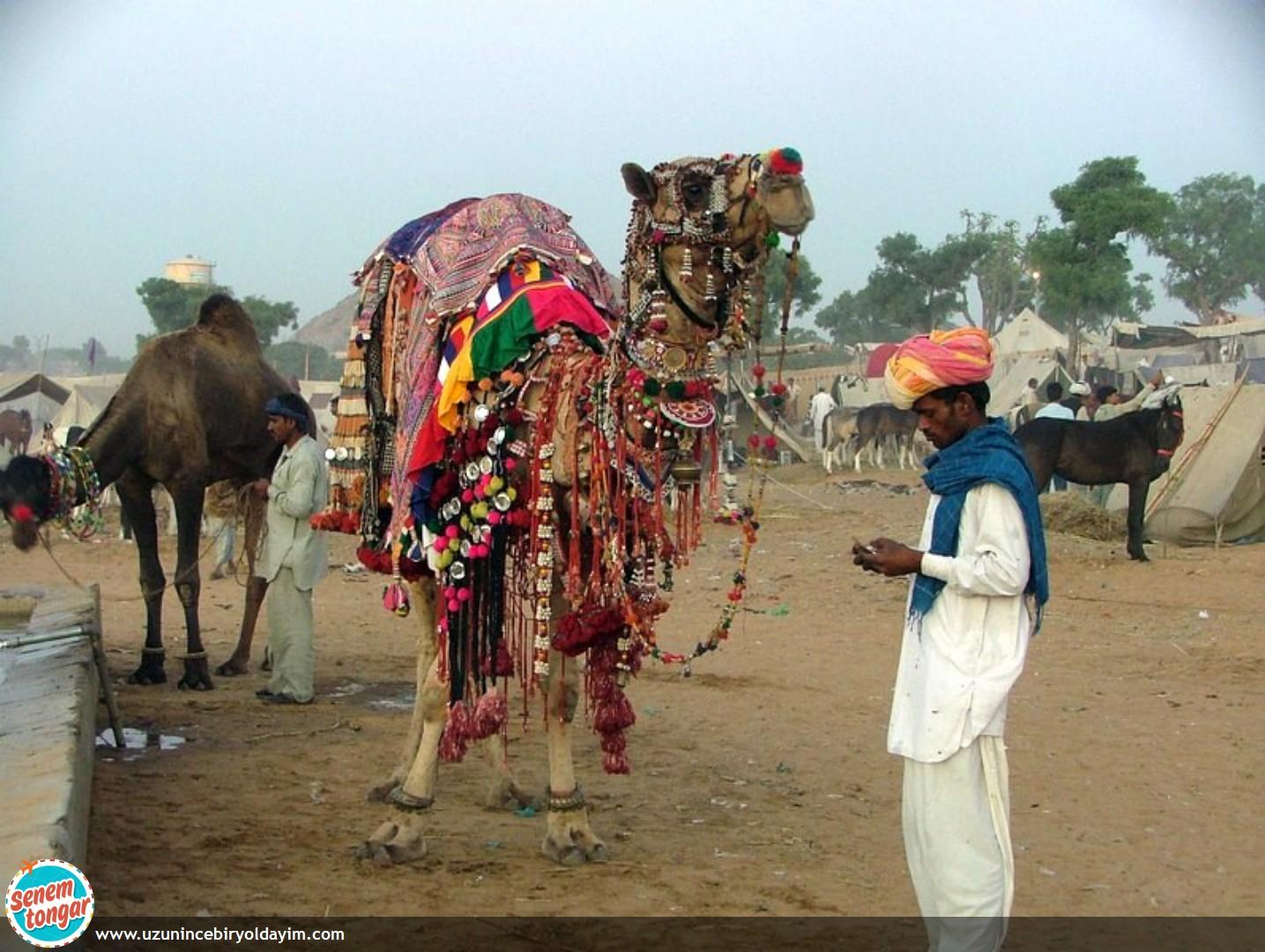 Pushkar Deve Festivali