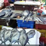Balık Pazarı-Valparaiso